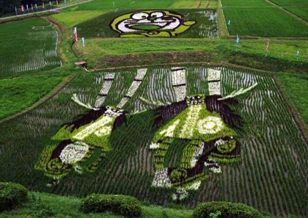 поля рисовые фото